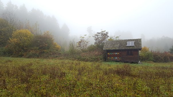 Fog, Forest, Glade, Hut, Beehive, Autumn