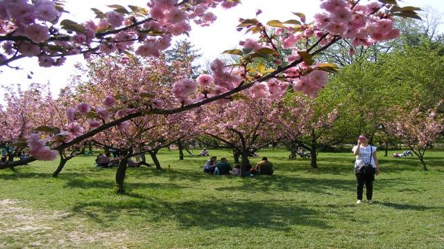 Bucharest Japanese Garden