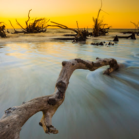 Driftwood at sunset by John Wollwerth - Landscapes Waterscapes ( photographer beaufort sc, driftwood, www.wollwerthimagery.com, hunting island, john wollwerth, photographer beaufort south carolina, landscape )