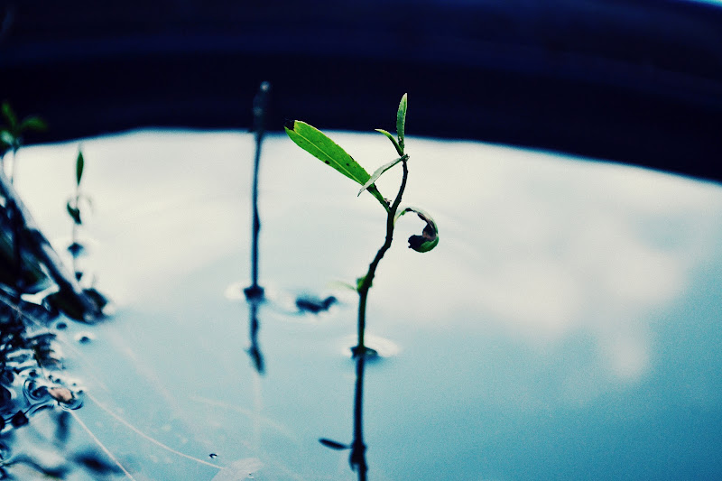 sopravvivere di sally.olivier