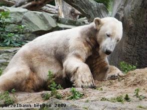 Photo: Friemelt Knut erst einmal ein wenig...