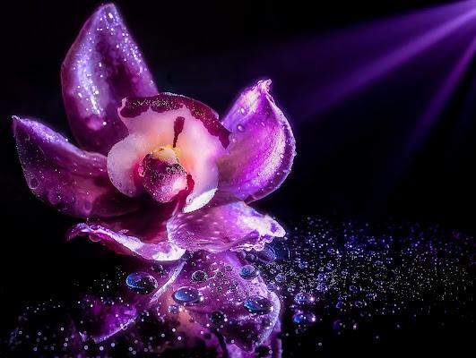 Purple orchid di davide_giovanni_volpi