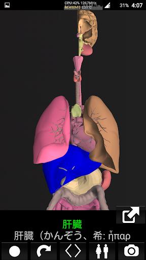 3D内臓(解剖学)