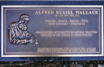 Photo: New plaque installed on new granite surround of Wallace's grave in 2000. It was designed by George Beccaloni and financed by the Wallace Memorial Fund. Copyright George Beccaloni