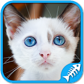 Cat Games Free: Cat puzzles games for all ages