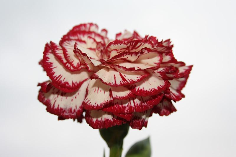 Grandma's favourite flower di piadinacolprosciutto