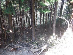 林道をハズレ尾根に復帰