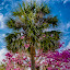 by Rob Whidden - Nature Up Close Trees & Bushes