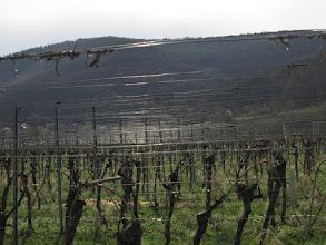 Photo: Und wieder die in der Sonne flirrenden Drähte bei den Weinstöcken