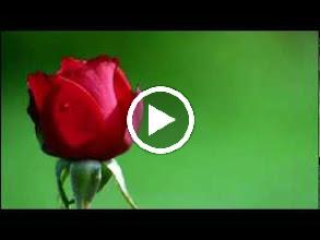 Video: A. Vivaldi  Concerto for bassoon, strings   b.c. in C major (RV 467) -