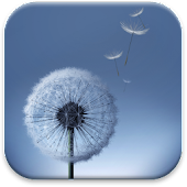 Dandelion S3 Theme