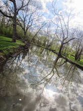 Photo: Reflection of trees and sky in a pond at Eastwood Park in Dayton, Ohio.