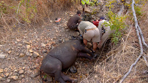 Operation Rhino thumbnail