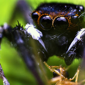 by Nelwan Handoko Hasan - Animals Insects & Spiders