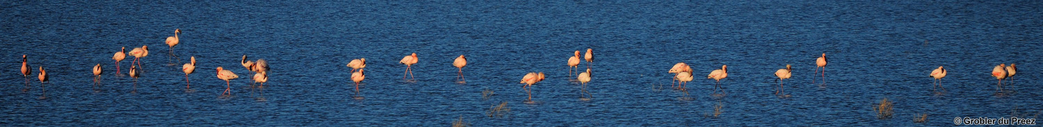 Photo: On our way home from Mokala National Park - Lesser  Flamingos in the salt pans at the small town of Dealesville.