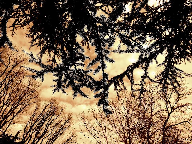 """""""Di quel color che per lo sole avverso nube dipigne da sera e da mane, vid' îo allora tutto 'l ciel cosperso."""" di pietros3"""