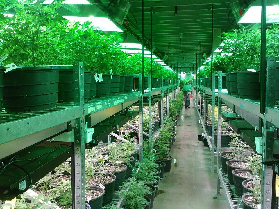 E:\Downloads\work\New folder\noiembrie 2019\cannabis\8. canada weed\article 6 photo 3 marijuana-269851_960_720.jpg