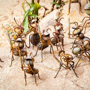 Ant Army.jpg