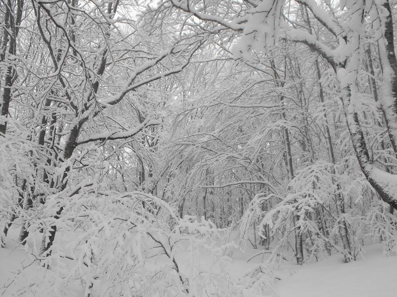Il bosco incantato di LucaMonego