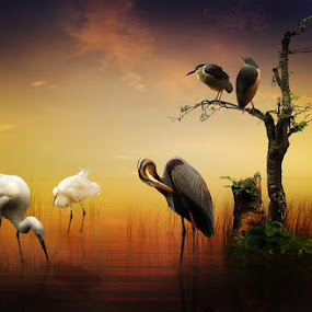 BIRD'S ISLAND by Zainal Arifin  - Digital Art Things