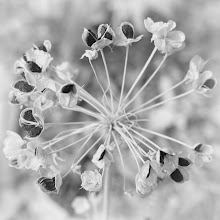 Photo: Gone To Seed