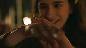 Giant Asian Mantises thumbnail