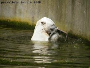Photo: Beherzter Zahn- und Tatzeneinsatz ;-)