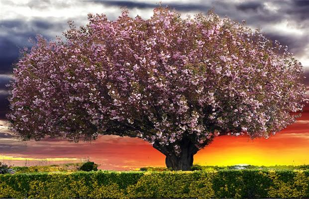 Allegoria della ...Primavera