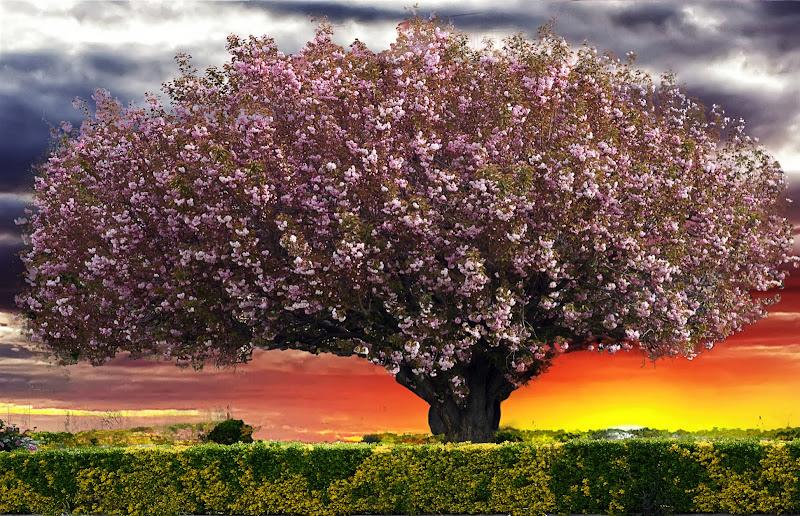 Allegoria della ...Primavera di oscar_costantini