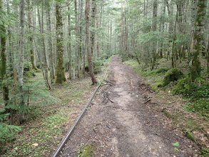 森林軌道跡沿いに進む