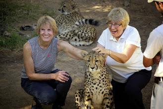 Photo: Pet a Cheetah