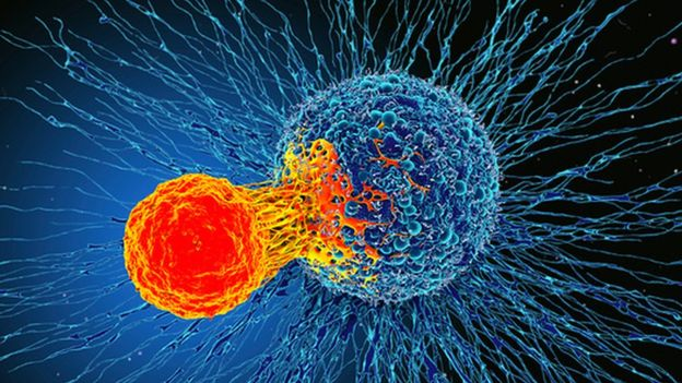 T-cells attack cancer cells