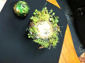 Photo: birds nest and moss ball