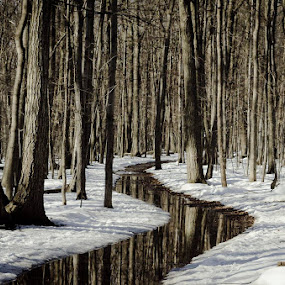 On sent le printemps !! by Claude Desrosiers - Uncategorized All Uncategorized ( water, trees, forest, spring )