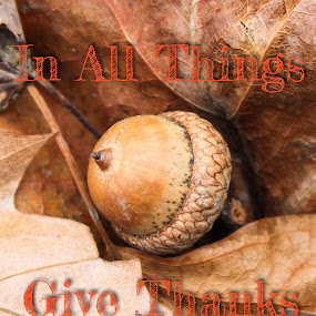 Give thanks by Pamela Hammer - Typography Quotes & Sentences ( quotes and sentences, illustration, leaves, typography, acorn,  )
