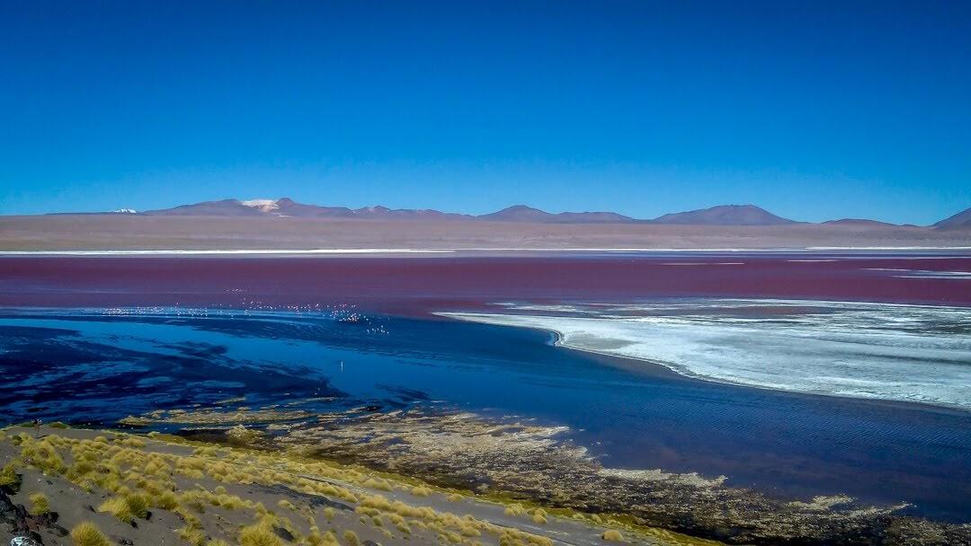 laguna colorado or red lagoon in salt plains bolivia.jpg