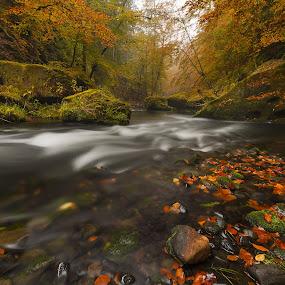 Fall River Kamenice Bohemian Switzerland National Park by Petr Musil - Nature Up Close Water ( water, national park, red, park, autumn, green, czech republic, rock, yellow )