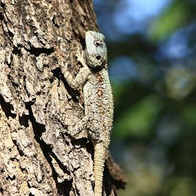 camaflague by Sandra Mcgowan - Nature Up Close Trees & Bushes ( camaflague, repitile, iguana, kruger park, south africa )