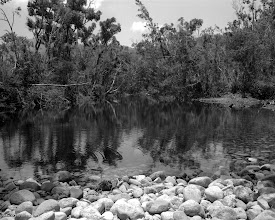 Photo: Sunday Creek is located a little North of Ingham, just over the Cardwell Range, tucked away in a corner of a cattle property surrounded by National Park... The owner of the place told me this waterhole is 16 metres deep and always freezing cold.  Camera - Mamiya 7 Lens - Mamiya 65mm 1:4 Film - Fomapan 100 Process - T-Max developer 1+4