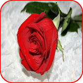 3D Red Rose Images