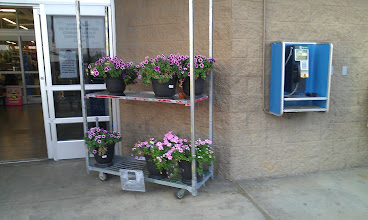 Photo: I love, Love, LOVE Spring and all of the flowers outside of the stores are so pretty right now.