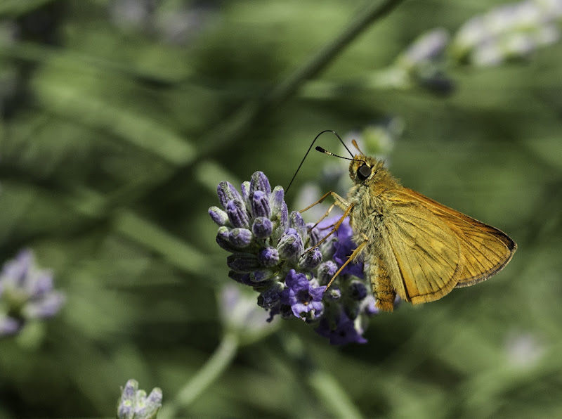 Farfalla di mfabio1976