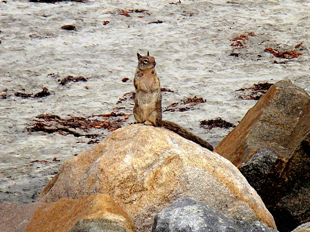 Photo: Even the squirrels are friendly in CA.  This one has white spots on its back.