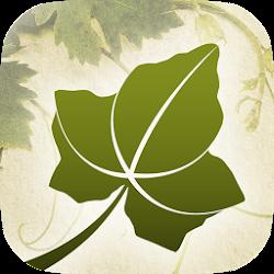 Ivy of Wheaton