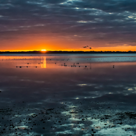 Birds in the water by Joe Saladino - Landscapes Sunsets & Sunrises ( sunset, sandhill cranes, clouds, birds, water )