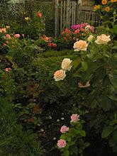 Photo: Jardins de Bagatelle
