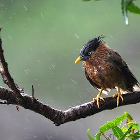 Monsoon Masti by Mohan Matang - Animals Birds