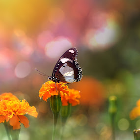 morning light by Runa Nightsongwoods - Animals Insects & Spiders ( blurred, butterfly, colorful, meadow, morning glory, blur, cinematic, sunlight, bokeh, sun, flower,  )