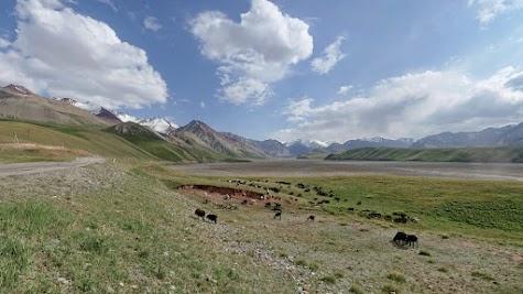 Saftige Wiesen bieten Futter für große Schaf- und Kuhherden.