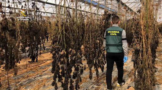 Fiscalía pide 3 años y 9 meses para el agricultor detenido con cáñamo industrial